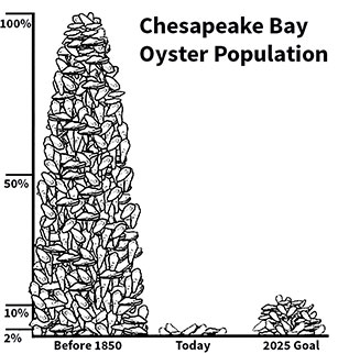 oyster-population